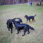 kjell-olsson-hundar1