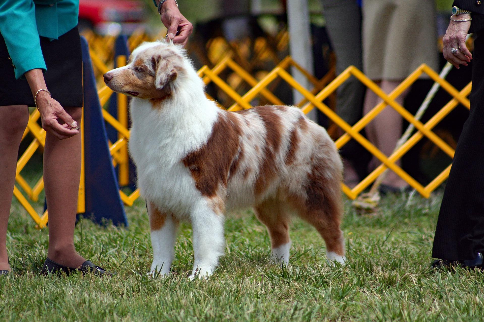 dogshow